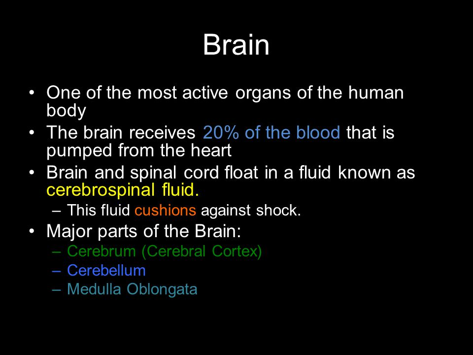 Brain One of the most active organs of the human body