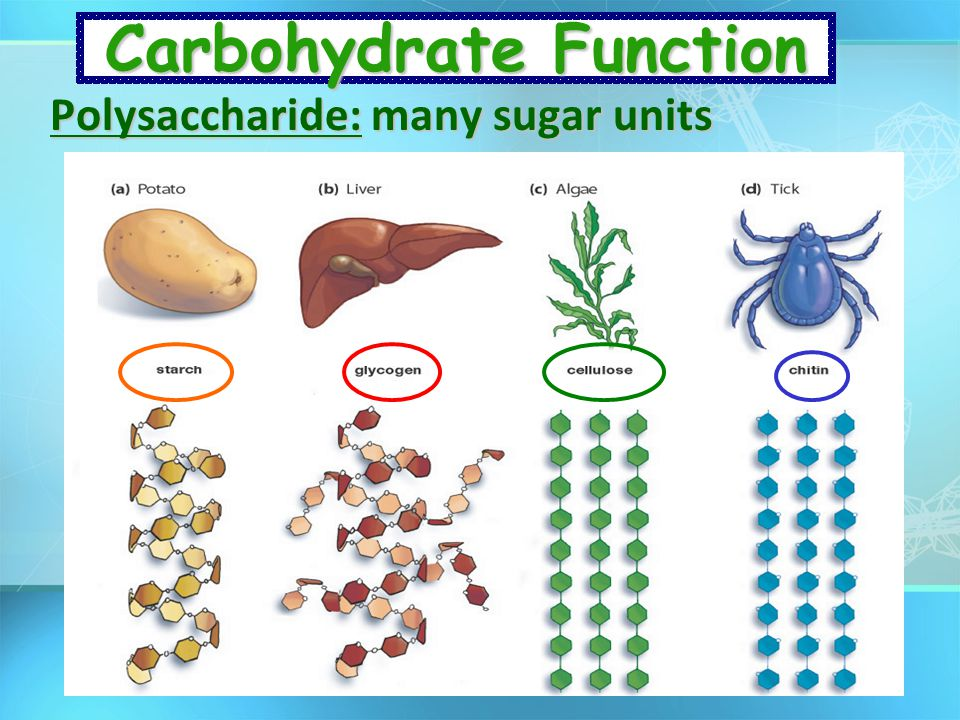 Carbohydrate Function