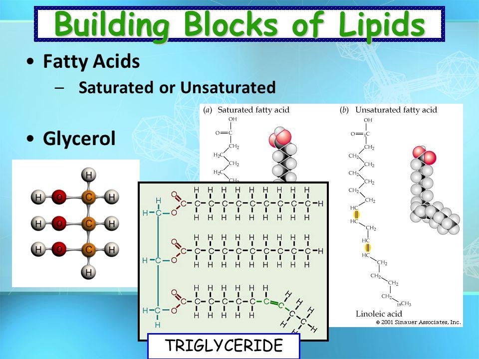 Building Blocks of Lipids