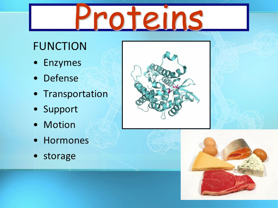 Proteins FUNCTION Enzymes Defense Transportation Support Motion
