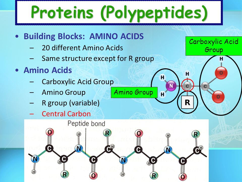 Proteins (Polypeptides)