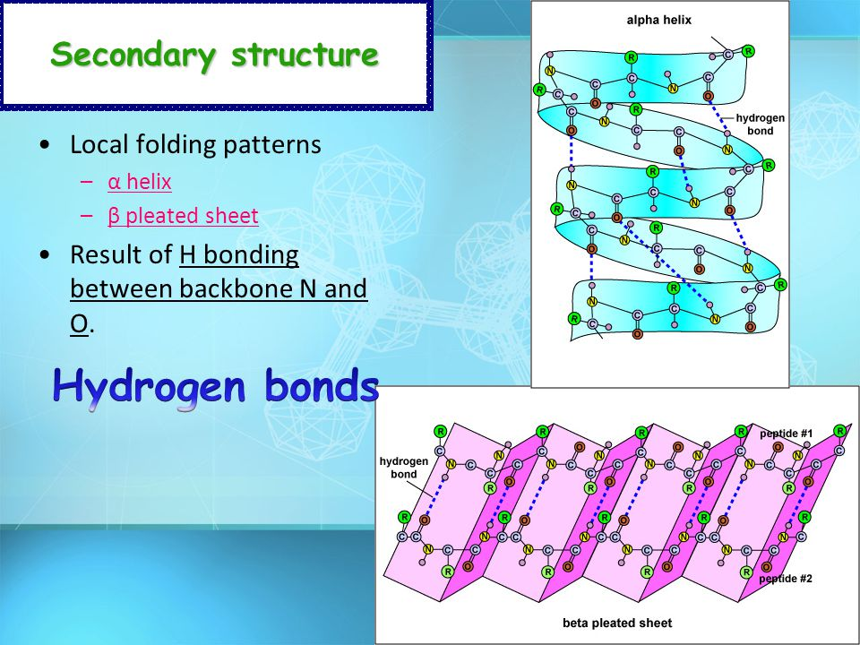 Hydrogen bonds Secondary structure Local folding patterns