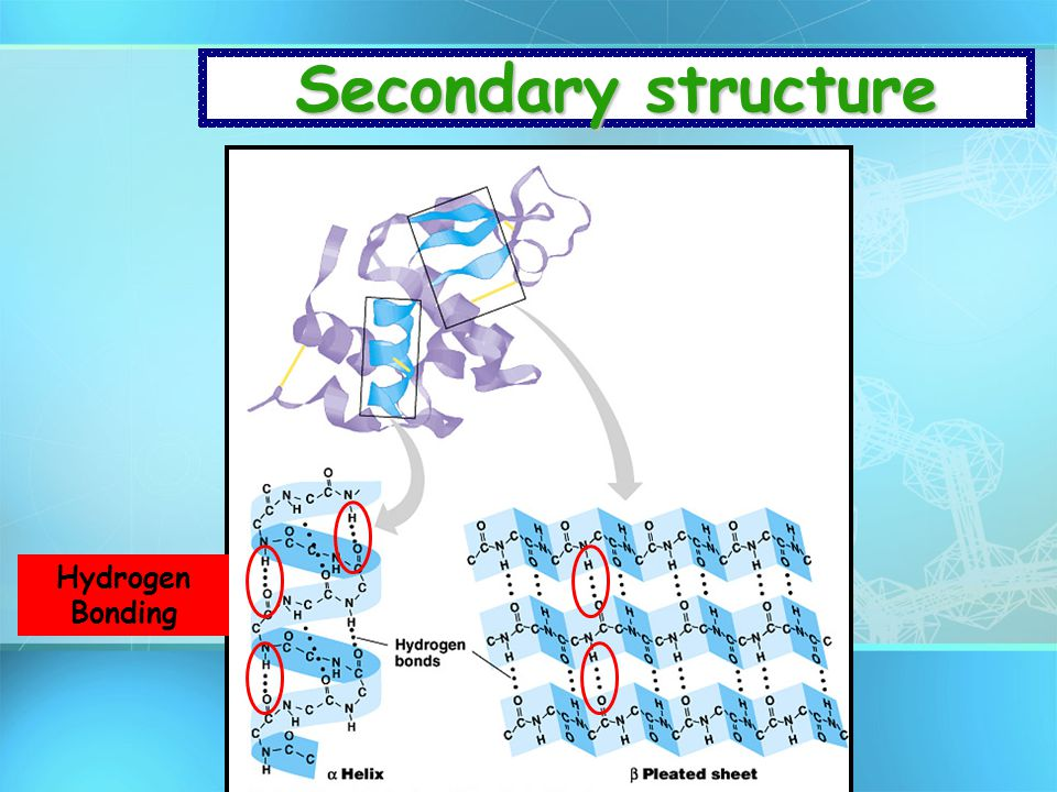 Secondary structure Hydrogen Bonding