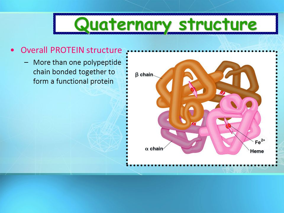 Quaternary structure Overall PROTEIN structure
