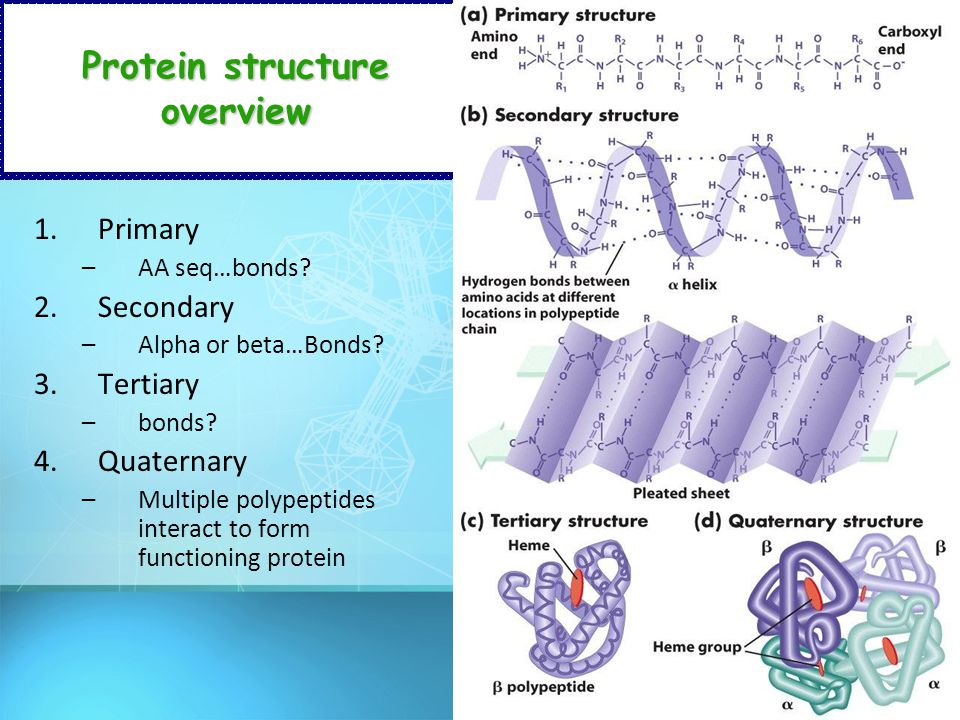 Protein structure overview