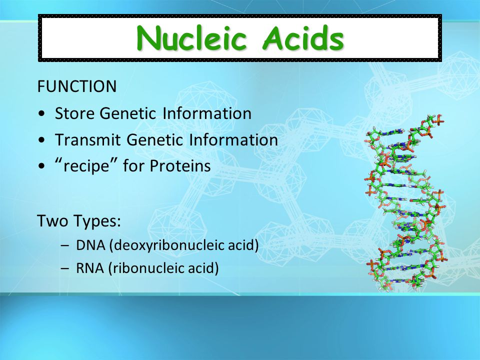 Nucleic Acids FUNCTION Store Genetic Information