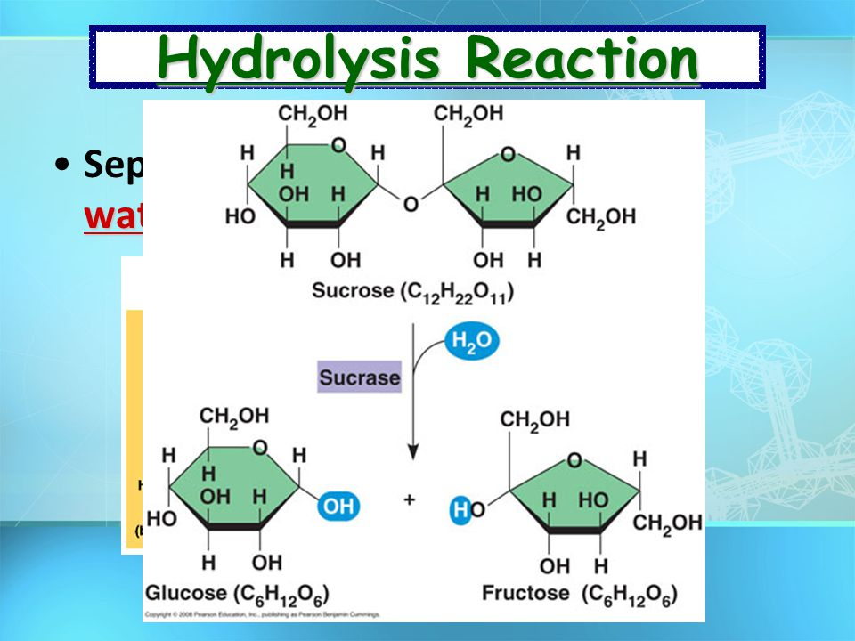 Hydrolysis Reaction Separates monomers by adding water