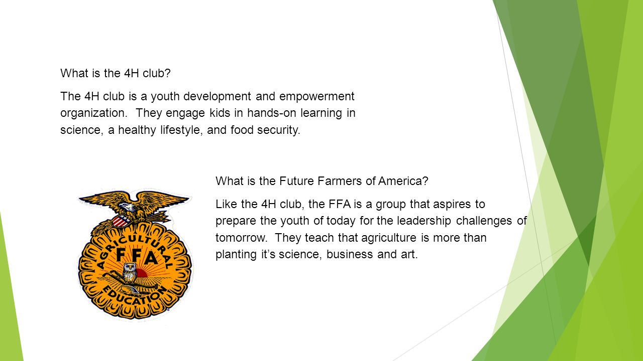 What is the 4H club