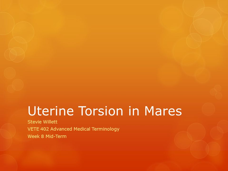 Uterine Torsion in Mares