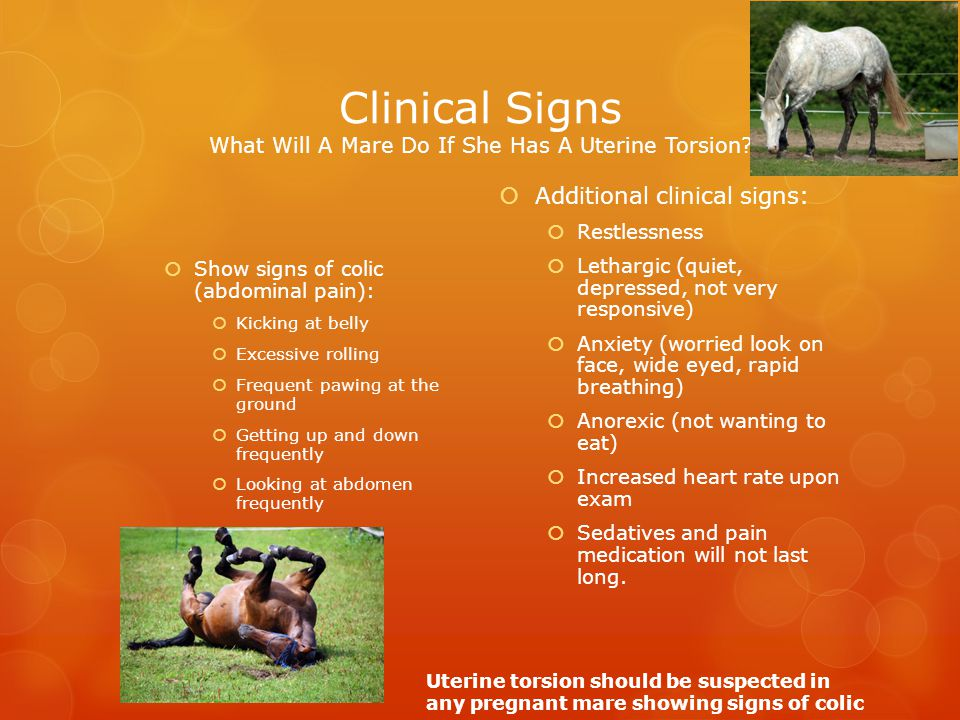 Clinical Signs What Will A Mare Do If She Has A Uterine Torsion