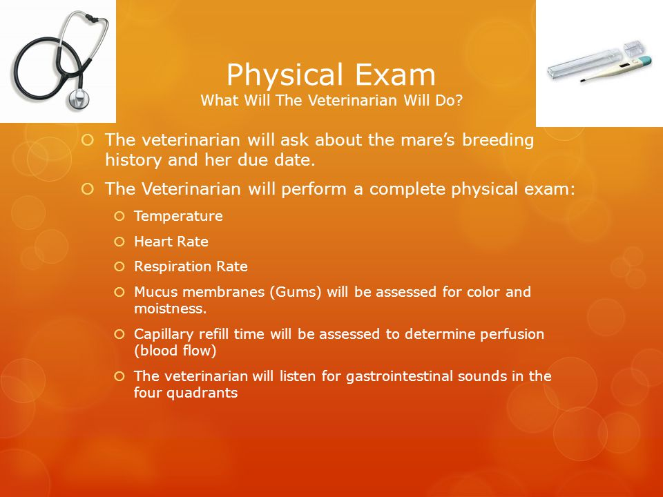 Physical Exam What Will The Veterinarian Will Do
