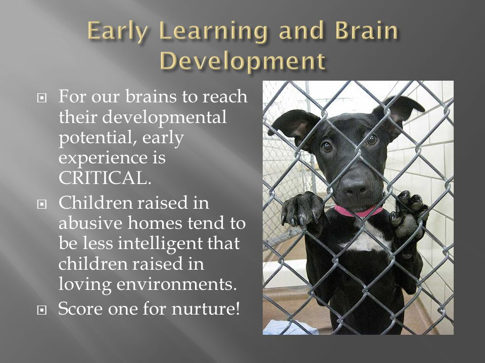 Early Learning and Brain Development