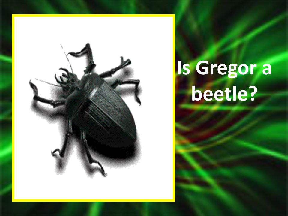 Is Gregor a beetle