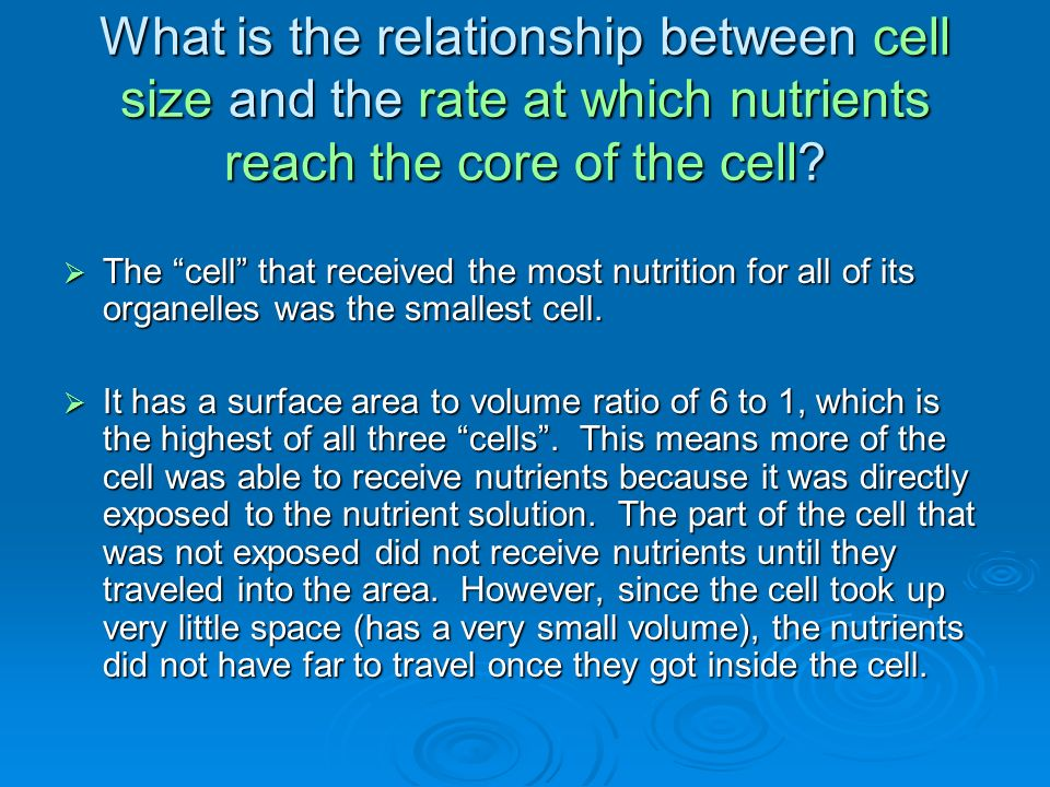 What is the relationship between cell size and the rate at which nutrients reach the core of the cell