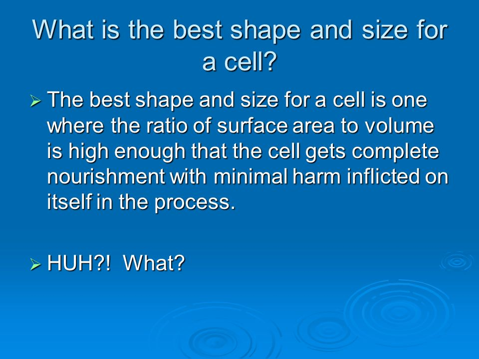 What is the best shape and size for a cell