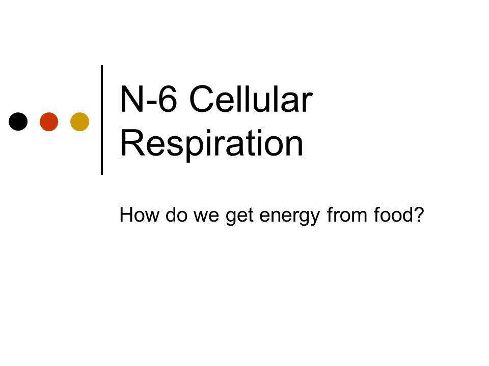 N-6 Cellular Respiration
