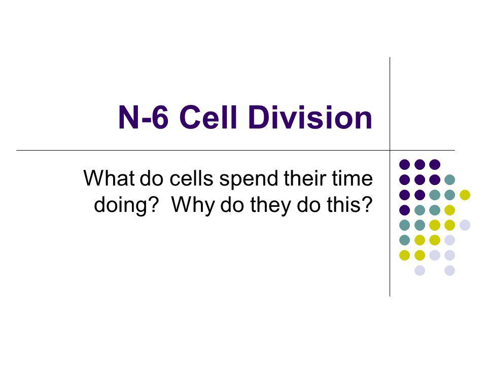 What do cells spend their time doing Why do they do this