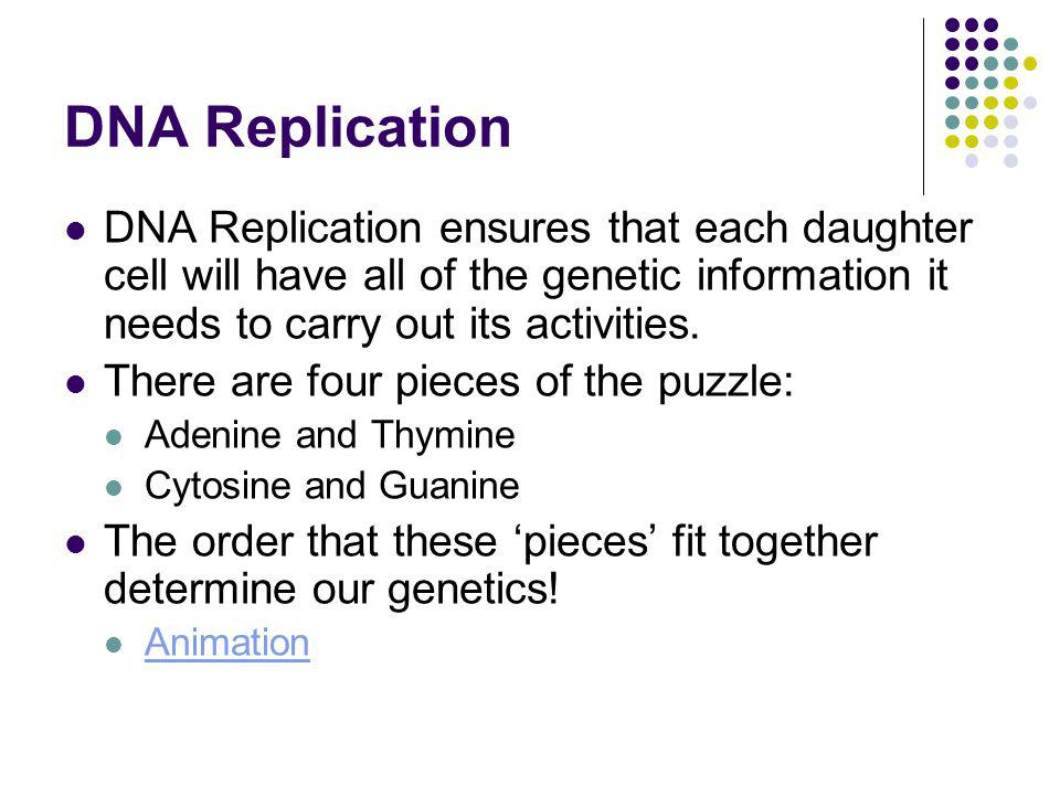 DNA Replication DNA Replication ensures that each daughter cell will have all of the genetic information it needs to carry out its activities.