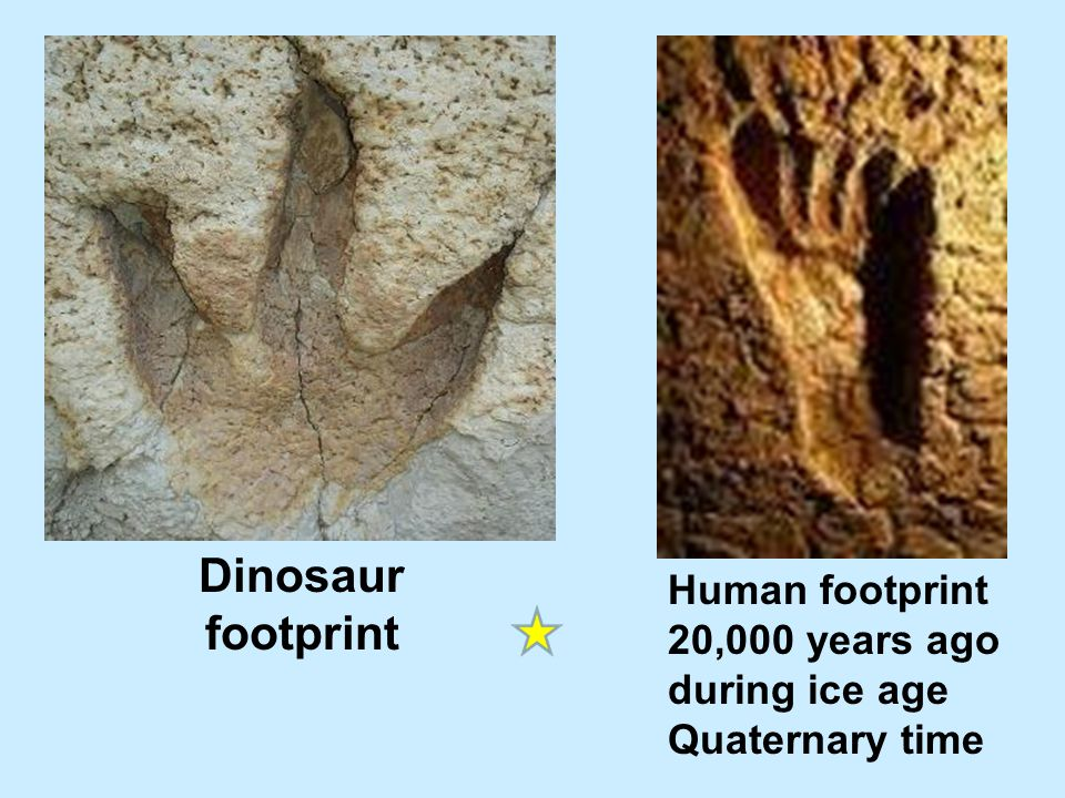 Dinosaur footprint Human footprint 20,000 years ago during ice age Quaternary time