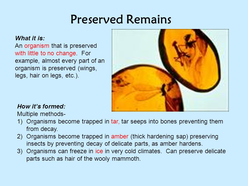 Preserved Remains What it is:
