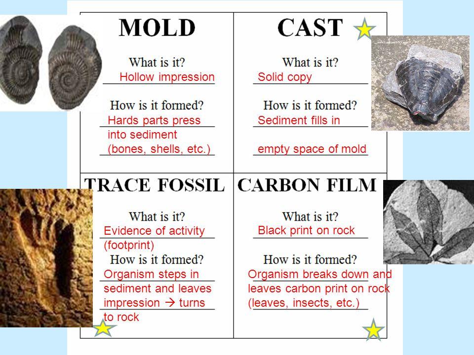 Hollow impression Solid copy. Hards parts press into sediment (bones, shells, etc.) Sediment fills in.