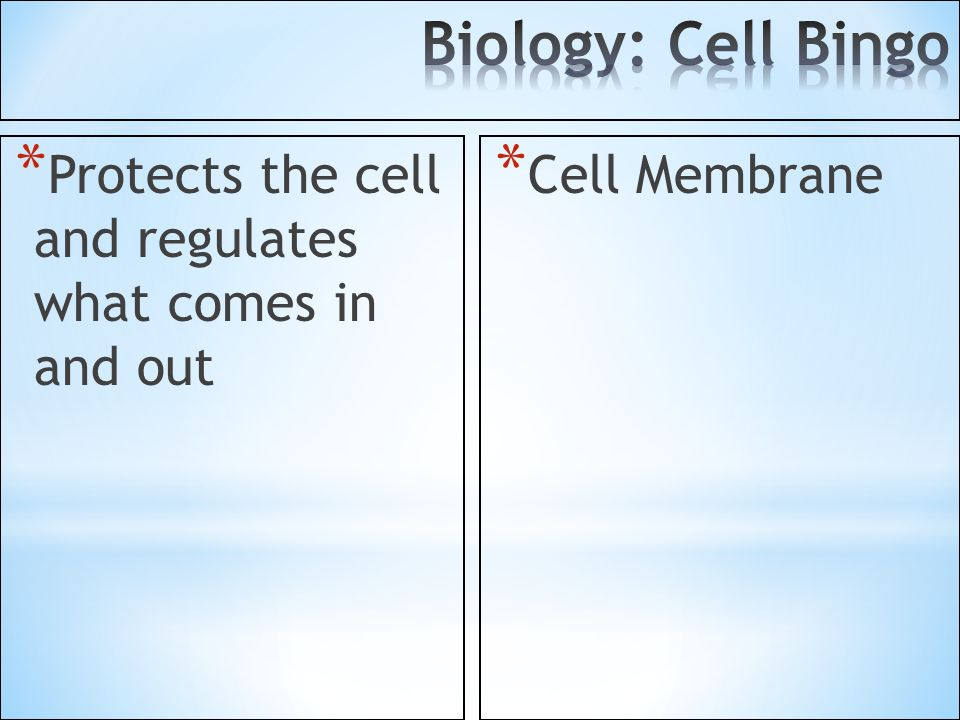 Biology: Cell Bingo Protects the cell and regulates what comes in and out Cell Membrane