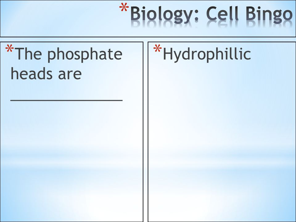 Biology: Cell Bingo The phosphate heads are _____________ Hydrophillic