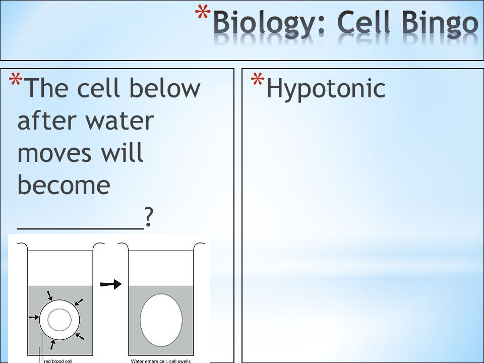 Biology: Cell Bingo The cell below after water moves will become _________ Hypotonic