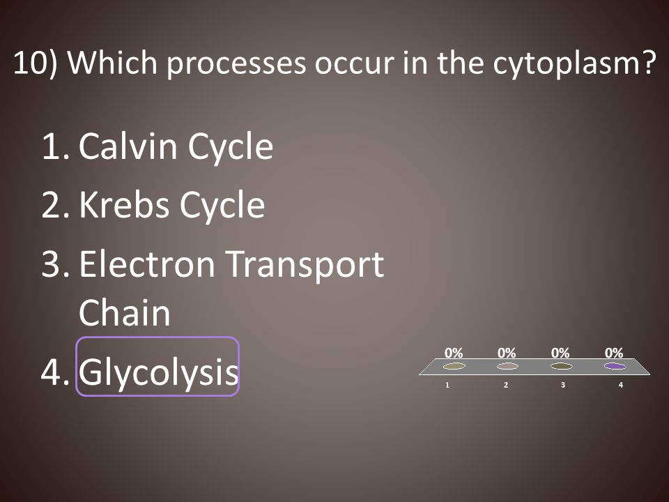 10) Which processes occur in the cytoplasm