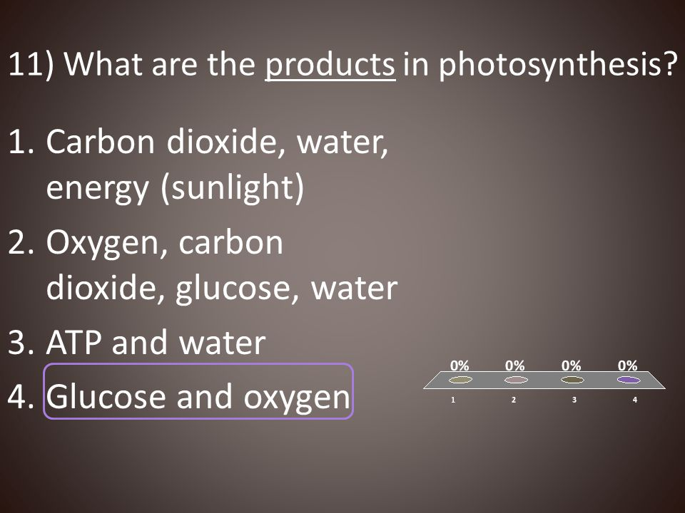 11) What are the products in photosynthesis