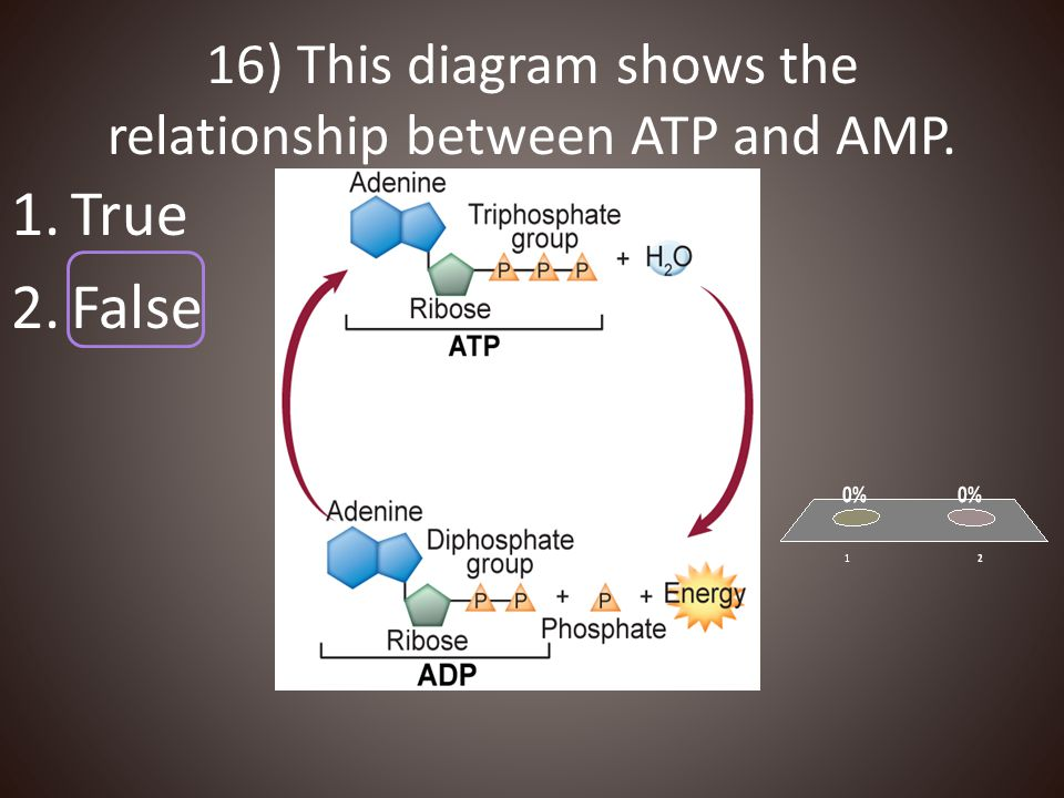 16) This diagram shows the relationship between ATP and AMP.