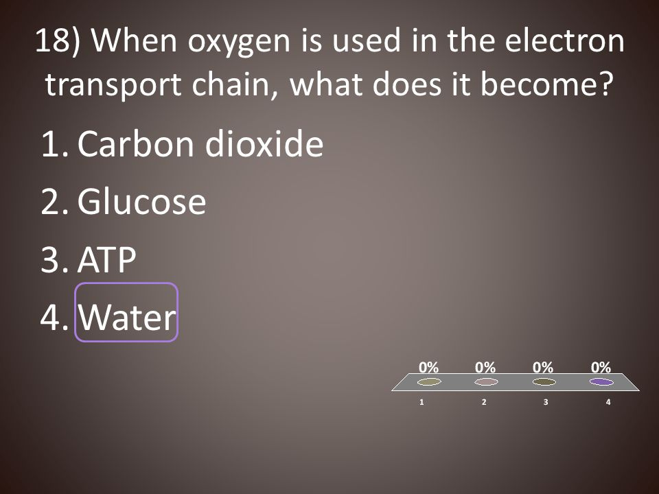 Carbon dioxide Glucose ATP Water