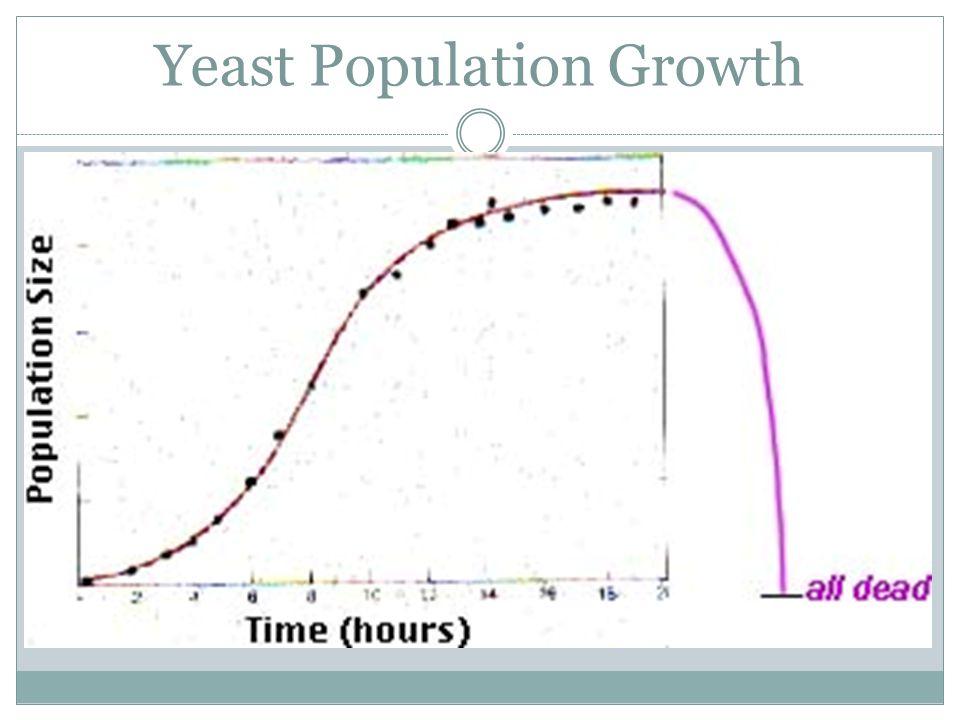 Yeast Population Growth