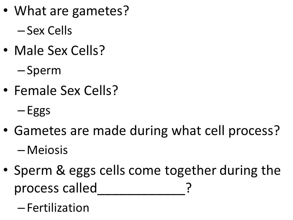 Gametes are made during what cell process