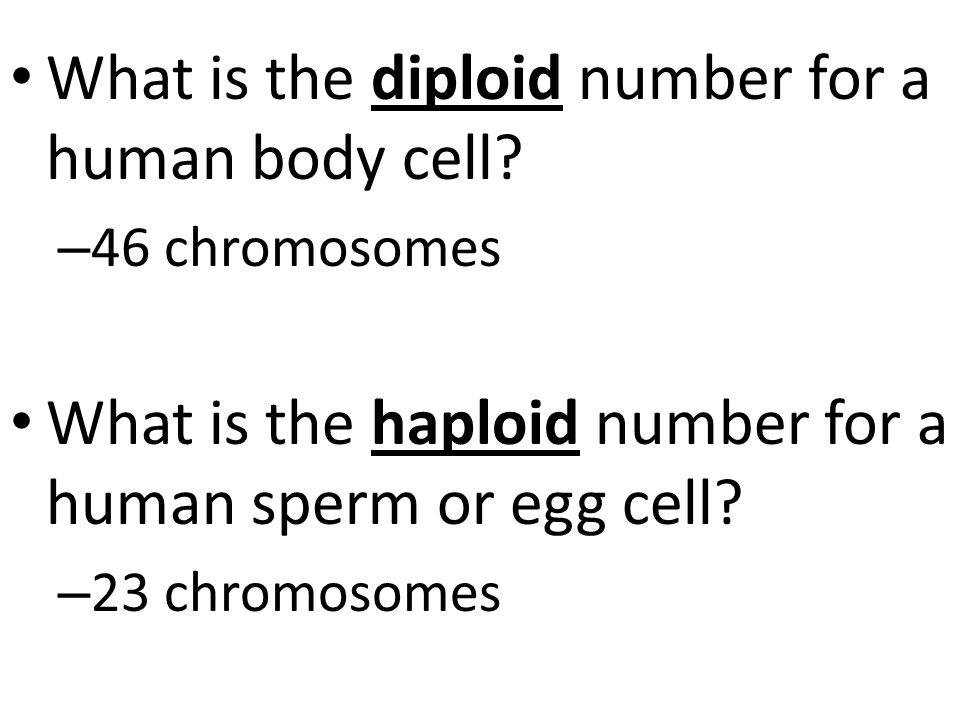 What is the diploid number for a human body cell