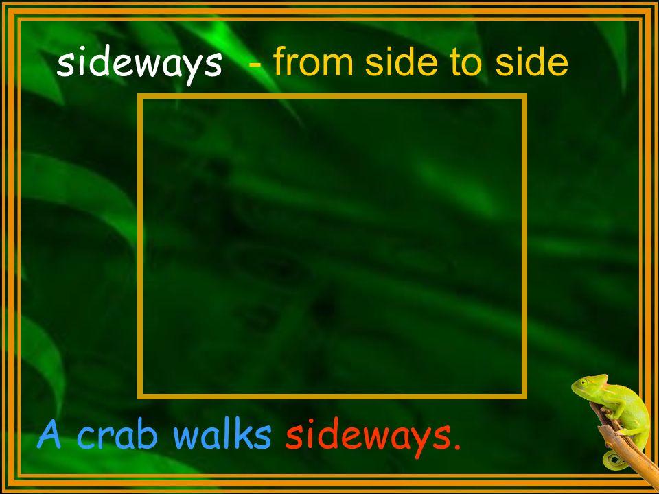 sideways - from side to side A crab walks sideways.