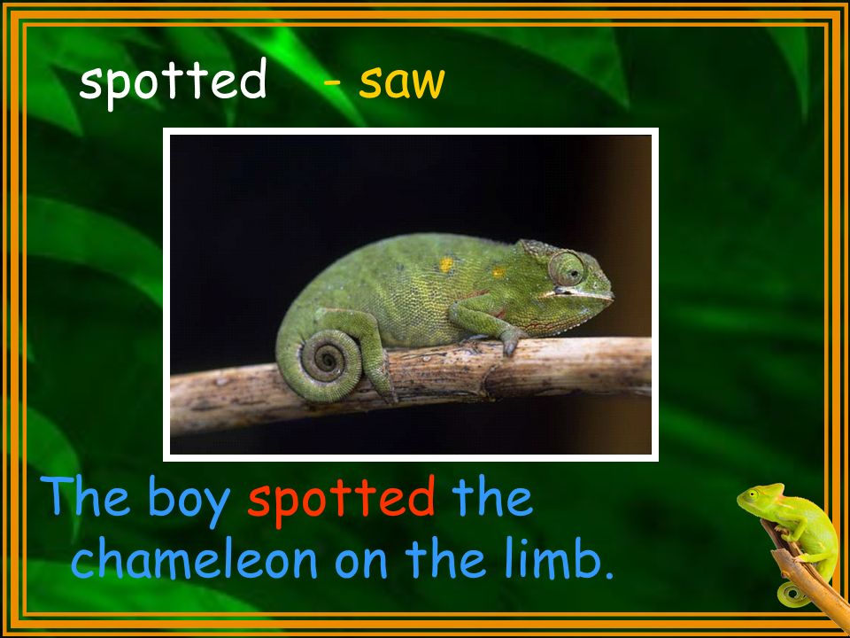 spotted - saw The boy spotted the chameleon on the limb.
