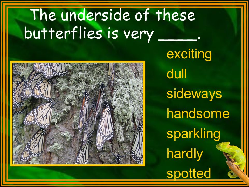The underside of these butterflies is very ____.