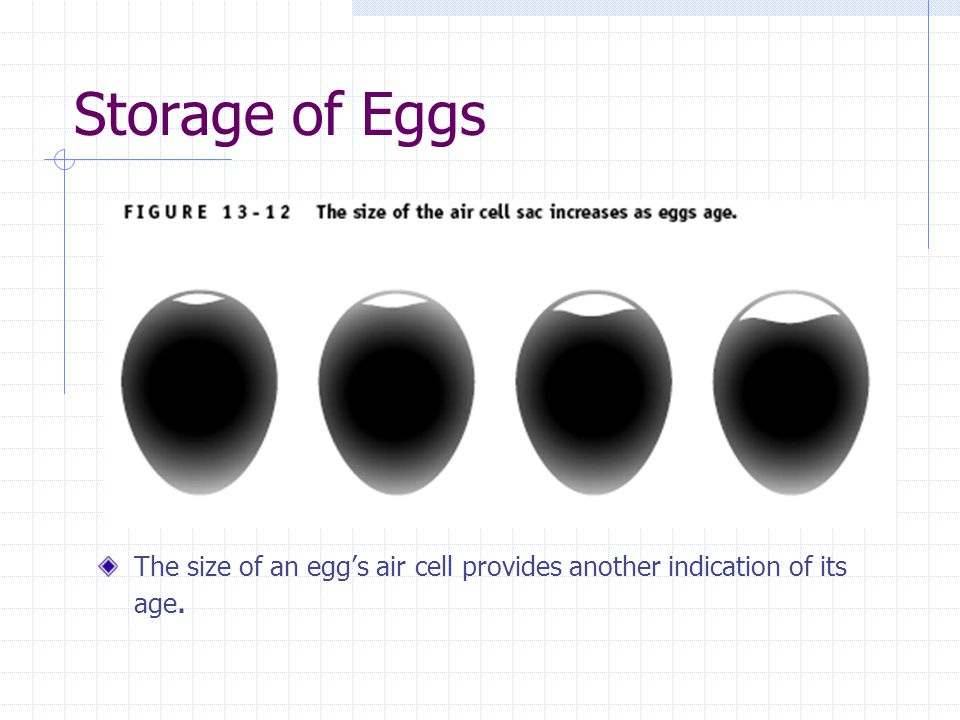 Storage of Eggs The size of an egg's air cell provides another indication of its age.