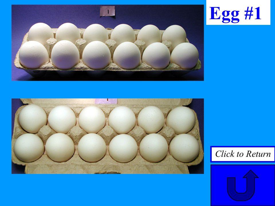 Egg #1 Click to Return
