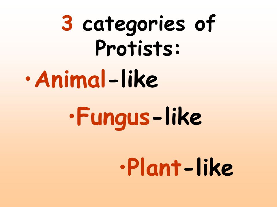3 categories of Protists: