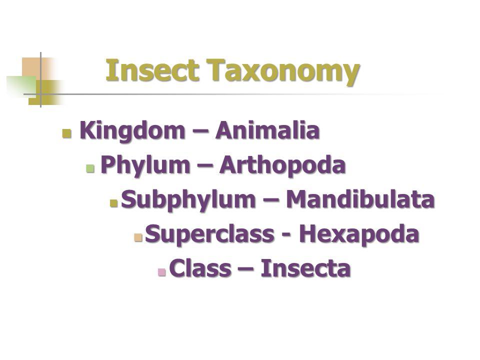 Insect Taxonomy Kingdom – Animalia Phylum – Arthopoda