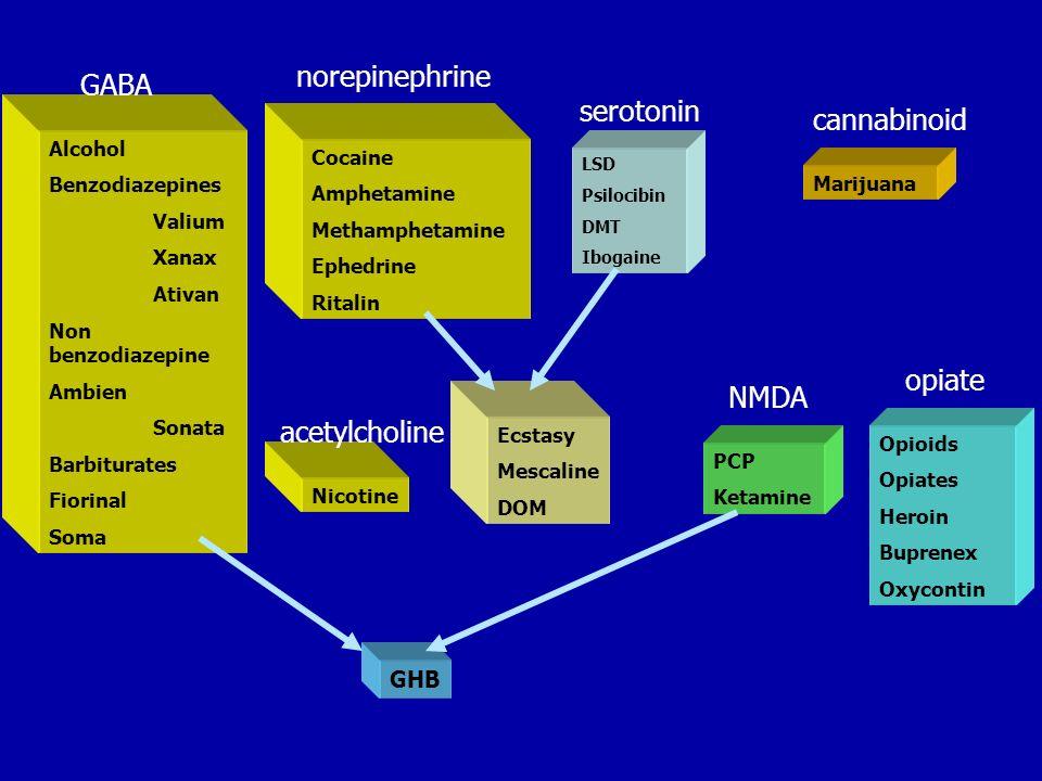 norepinephrine GABA serotonin cannabinoid opiate NMDA acetylcholine