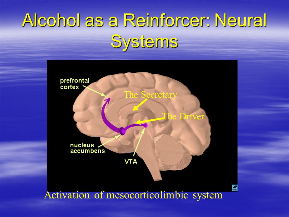 Alcohol as a Reinforcer: Neural Systems