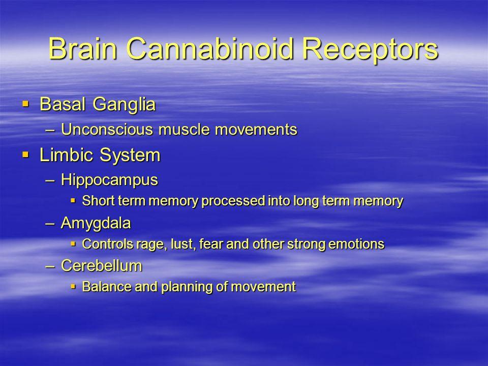 Brain Cannabinoid Receptors