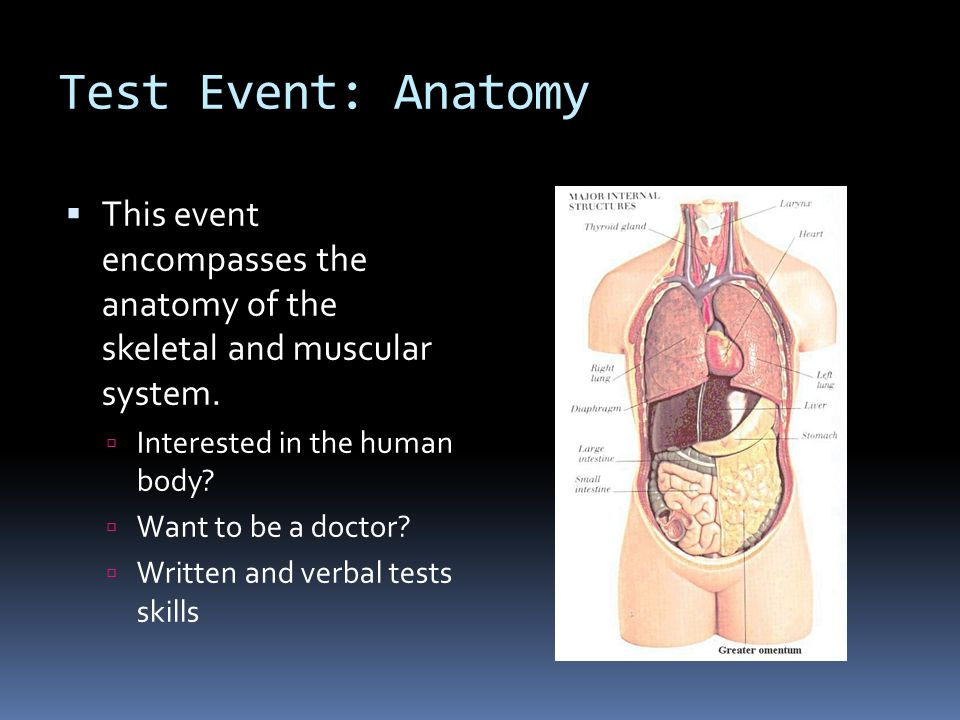 Test Event: Anatomy This event encompasses the anatomy of the skeletal and muscular system. Interested in the human body