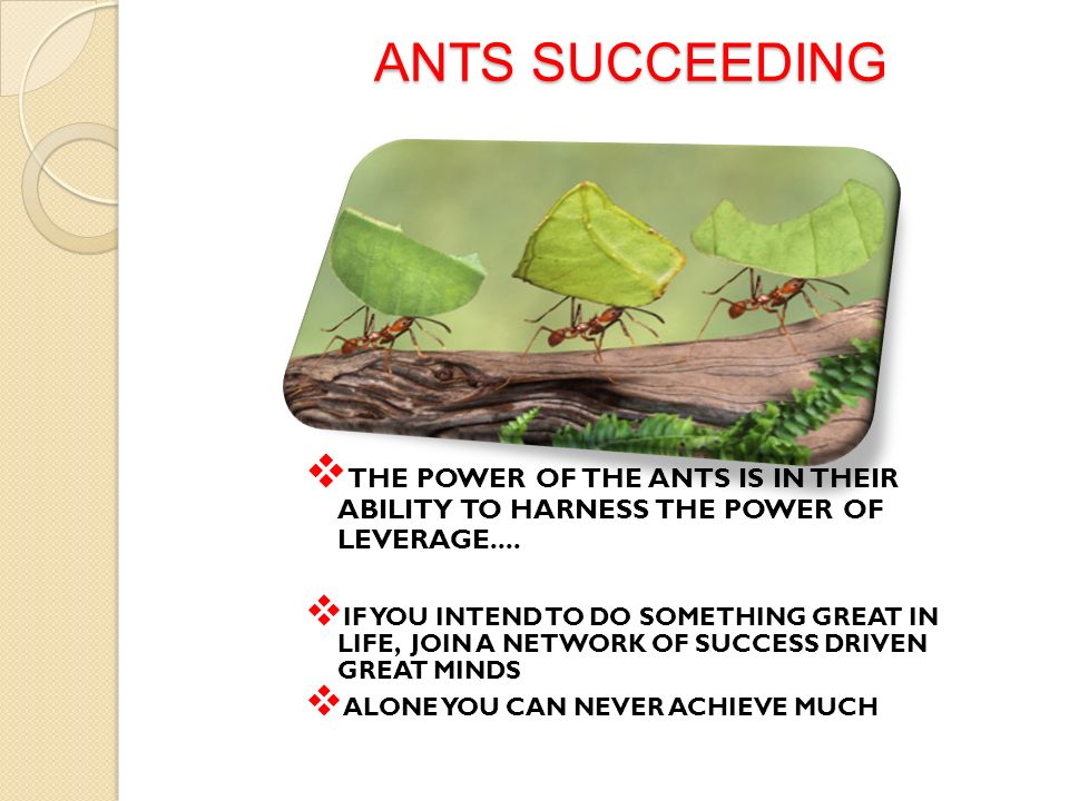 ANTS SUCCEEDING THE POWER OF THE ANTS IS IN THEIR ABILITY TO HARNESS THE POWER OF LEVERAGE....