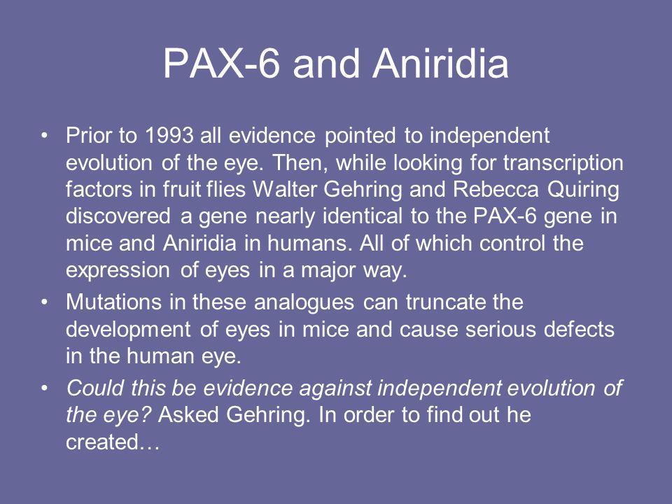 PAX-6 and Aniridia