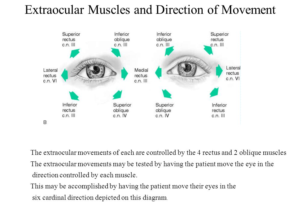 Extraocular Muscles and Direction of Movement