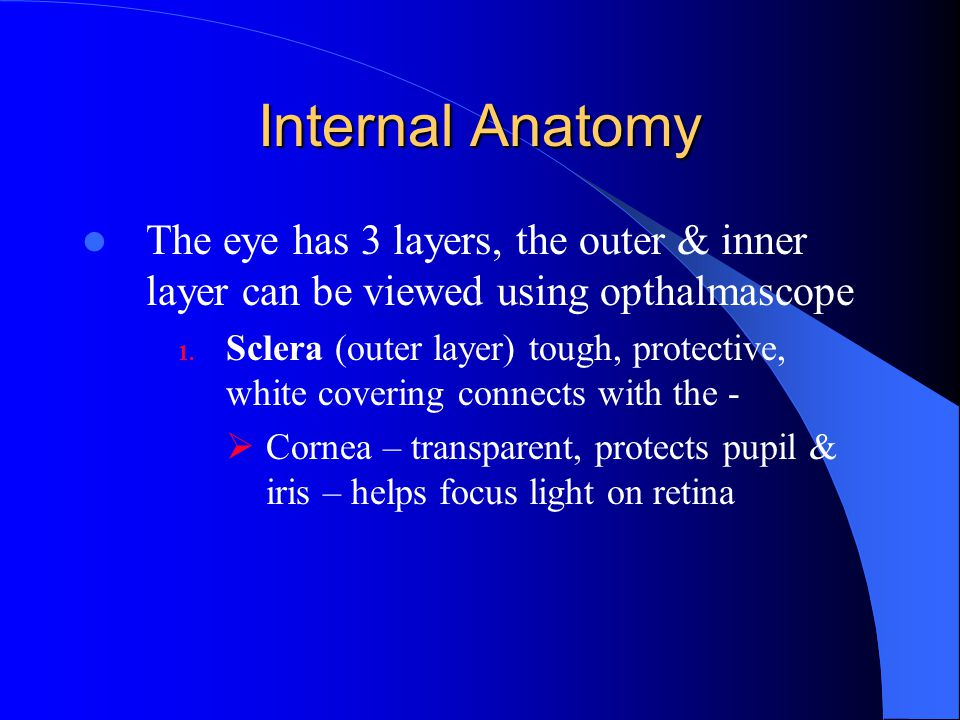 Internal Anatomy The eye has 3 layers, the outer & inner layer can be viewed using opthalmascope.